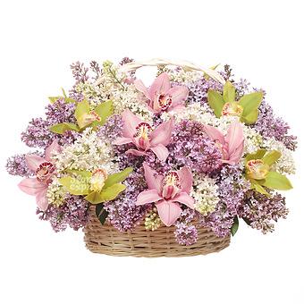 Букет Неделя счастья: Орхидеи